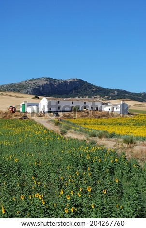Cortijo with sunflowers in the foreground, Near Almargen, Malaga Province, Andalusia, Spain, Western Europe. - stock photo