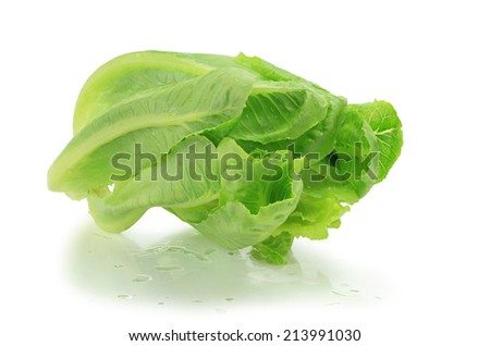 Cos lettuce isolated on white background. This has clipping path.