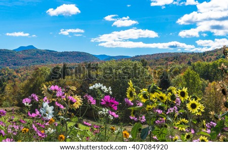 cosmos and sunflowers blooming in garden against  the hills and Green Mountains of Vermont in fall foliage season, with Camels Hump Mountain seen in the distance   - stock photo