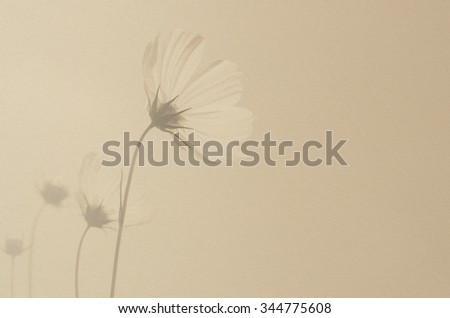 Cosmos flowers in monochrome on paper texture background, vintage style.