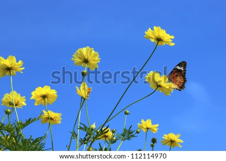 Cosmos on sunny day - stock photo