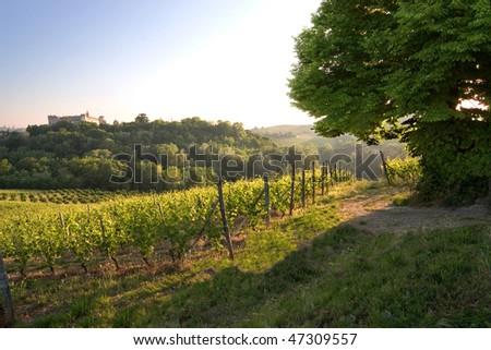 Costigliole d'Asti (Piedmont - Italy): landscape of vine and grapes - stock photo