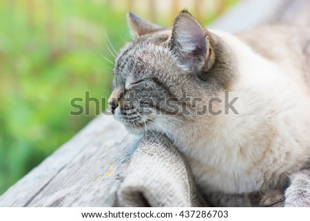 Cosy sleeping cat on a wood resting with pleasure on a fresh air in a garden