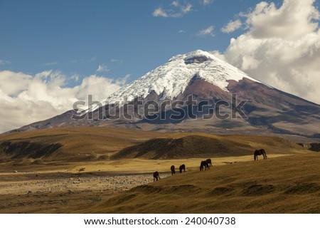 Cotopaxi volcano and wild horses - stock photo