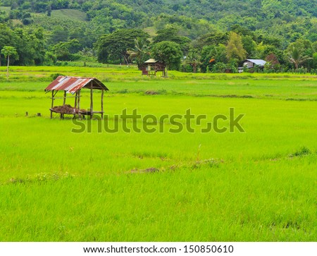 Cottage and green terraced rice field in Thailand