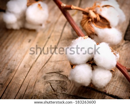 Cotton. Beautiful Cotton plant buds over wooden background - stock photo