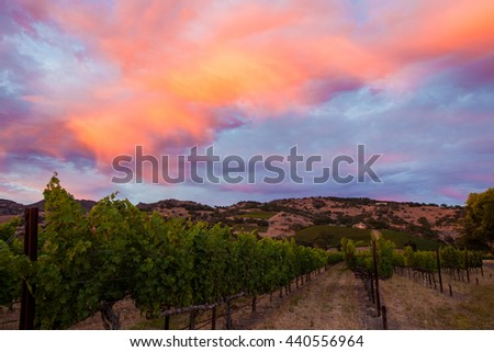 Cotton candy clouds at sunset in a California vineyard. Colorful, saturated sunset. Blue, purple, pink clouds. Looking down the rows of a California vineyard with rolling in the background. - stock photo