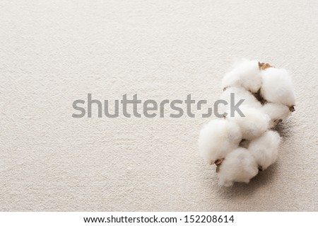 cotton flower on cloth background - stock photo
