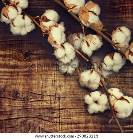 Cotton plant buds over wooden background. - stock photo