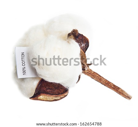 Cotton plant flower with tag label on white background - stock photo