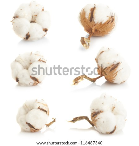 Cotton plant over white background collage - stock photo