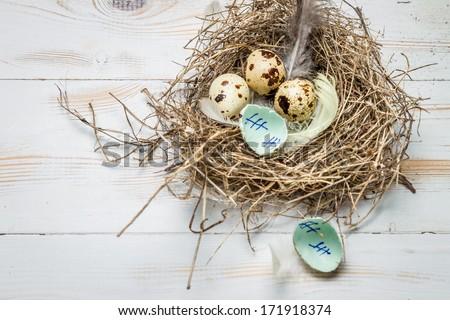 Leaving the nest essay