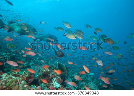 Countless Fish School and Swim Above a Coral Reef in the Tropics - stock photo