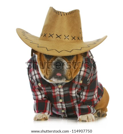 country dog - english bulldog puppy dressed up in western clothes and hat on white background - stock photo