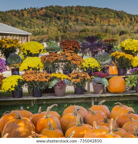 country farm stand with autumn flowers and pumpkins for sale