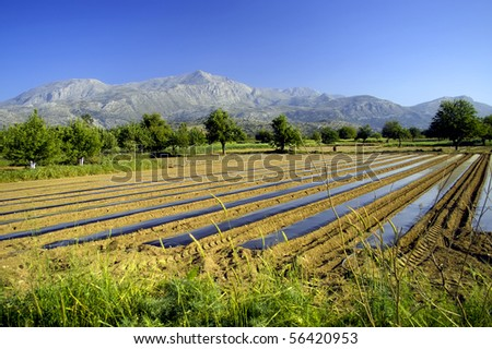 Country Farming Scene In Crete With Mountains The Background Greece