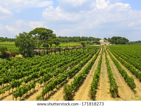 Country house near Montpellier (Herault, Languedoc-Roussillon, France) at summer, with vineyard