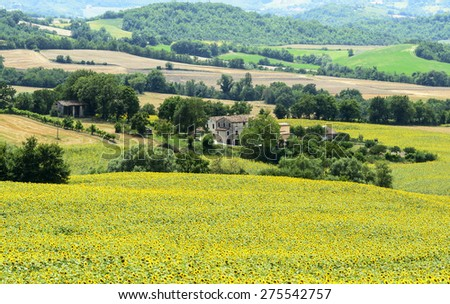 Country landscape between Cagli and Pergola (Pesaro e Urbino, Marches, Italy) at summer
