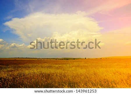 country landscape with golden wheat field and blue-pink sky with light clouds