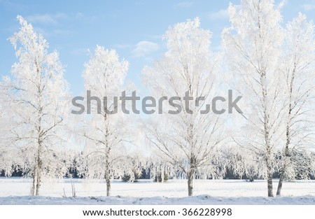 Country landscape with tree branches covered with white frost - stock photo