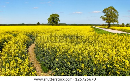 Country landscape with yellow canola field. - stock photo