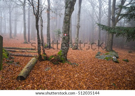 Country path running through the woods on an autumn day / beech forest