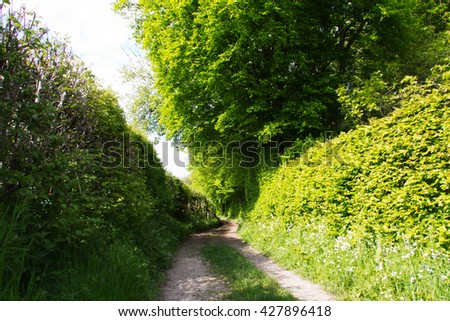 Country path with hedges on either side