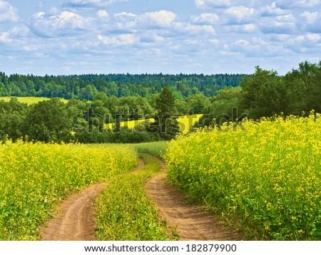 Country road across rape field - stock photo