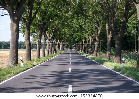 country road (alley) with green trees in summer