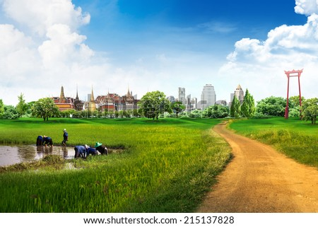 country road and green rice in thailand - stock photo