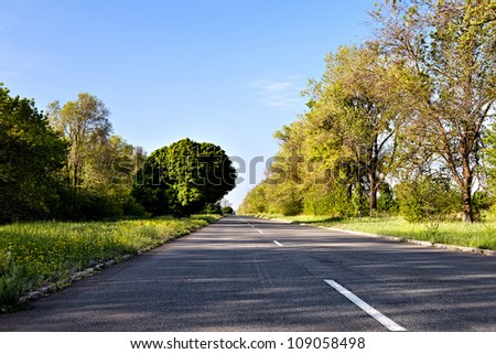 Country road at summer morning