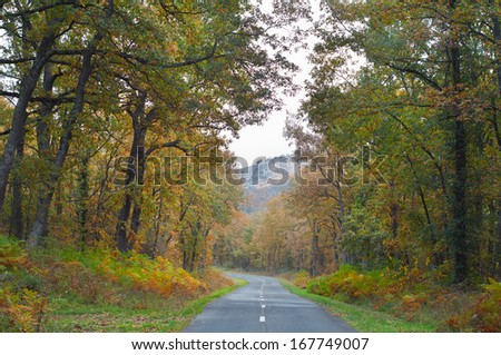 Country road in a beech tree forest, beautiful autumn colors