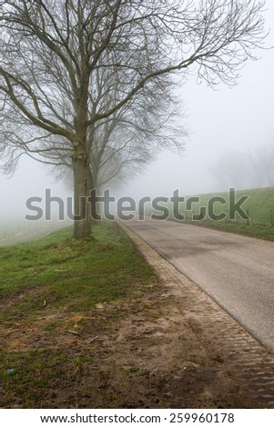 Country road in a rural landscape with a row of bare trees. It is early in the morning of a  foggy day at the end of the winter season. - stock photo