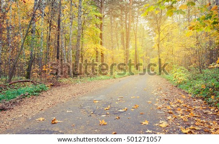 Country road in autumn forest, covert. Finland. Nature, trees in autumn forest.