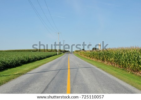Country road in Lancaster County, PA lined by fields of corn