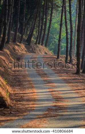 country road in pine forest - stock photo