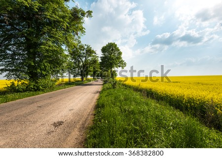 Country road in summer field. Sky with clouds in background. Yellow flowers in meadow and green trees along route. Car travel.