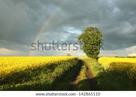 Country road in the field of blooming canola in the background of dark clouds. - stock photo