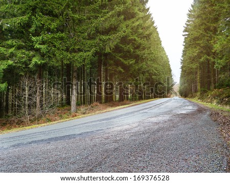 country road into a forrest at sunset, cloudy backlite shot. perfect for car and motorcycle copy space - stock photo