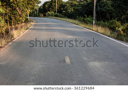 Country road lined with sycamore trees, Thai countryside  - stock photo