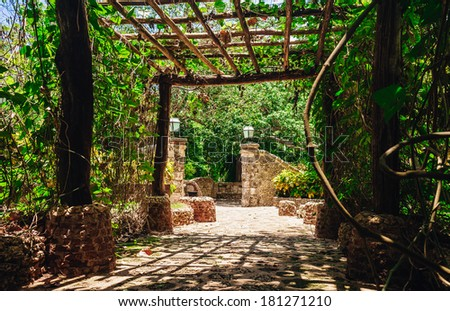 Country road running through tree alley in tropical garden. view of the lush green vegetation and palm trees growing in the mountains in the Dominican Republic - stock photo