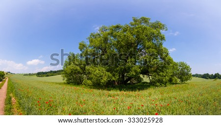 Country road through green fields and rows of trees in spring - stock photo