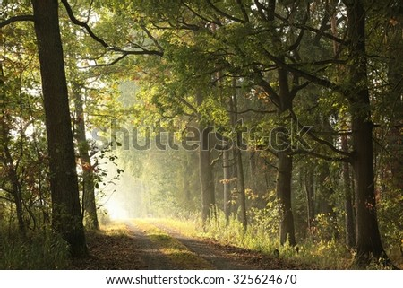 Country road through the autumnal forest on a foggy morning. - stock photo