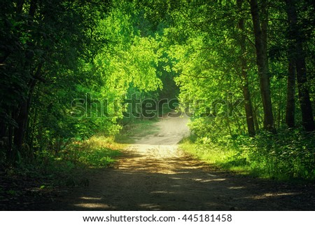 Country road through the forest in bright day time