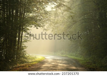 Country road through the forest on a misty autumn morning. - stock photo