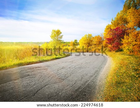 Country road winding among yellow autumn trees under the bright sun