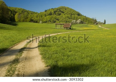 Country road with yellow flowers and blue sky