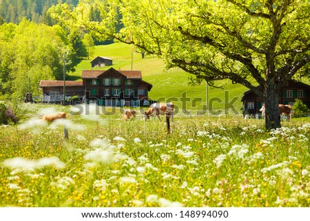 Country side field with tree, cows and house in Switzerland - stock photo