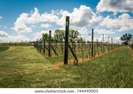 Country vineyard in Australia