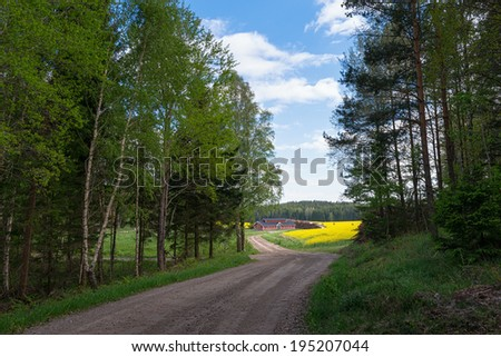 Countryroad with yellow rapefields and a farmhouse at he end of the road, Sweden - stock photo